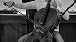 Violoncellista Profesional