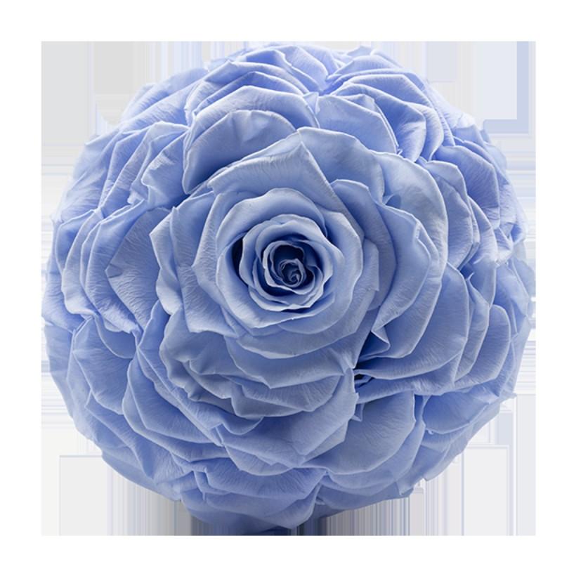 Rosmelia Small preservada. Color Baby Blue