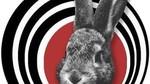 Empresa de Grupos de Rock y Pop en Murcia Roy Conejo